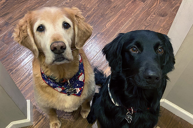 A photo of this couple's two dogs who are super sweet and loving